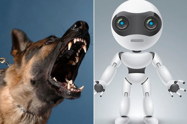 Robots could end up like dangerous dogs unless people learn to train them properly